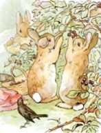 الأرانب الثلاثة