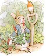 دخل الأرنب